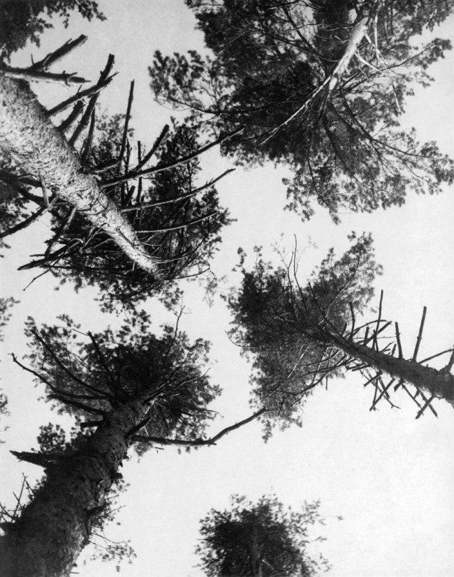 Alexander Rodchenko. 'Pines. Puschkino' 1927