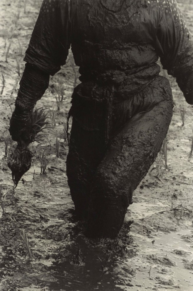 Hiroshi Hamaya (Japanese, 1915 - 1999) 'Woman Planting Rice, Toyama Prefecture' 1955