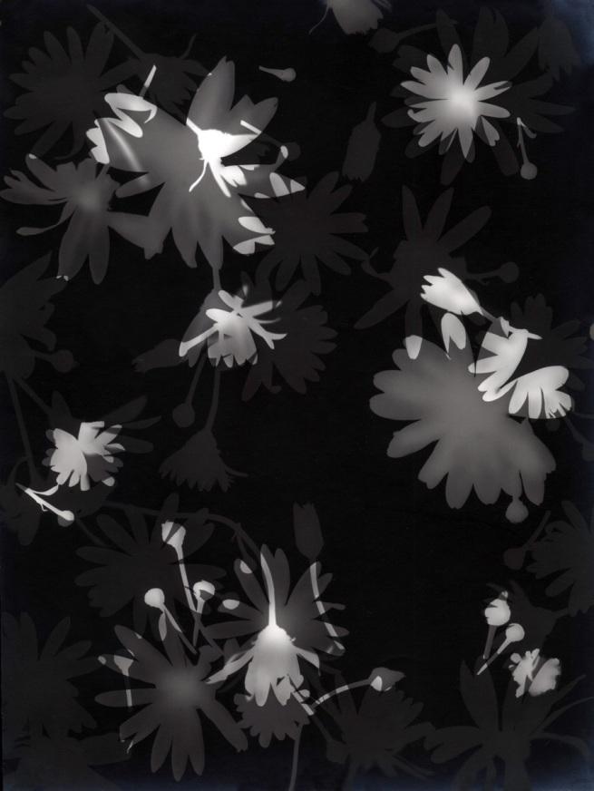 Lou Bonin-Tchimoukoff. 'Rayograph #35 - #75' Paris, 1928