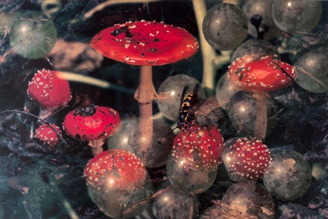 Peter Fischli / David Weiss. 'Mushrooms / Funghi 18' 1997-98