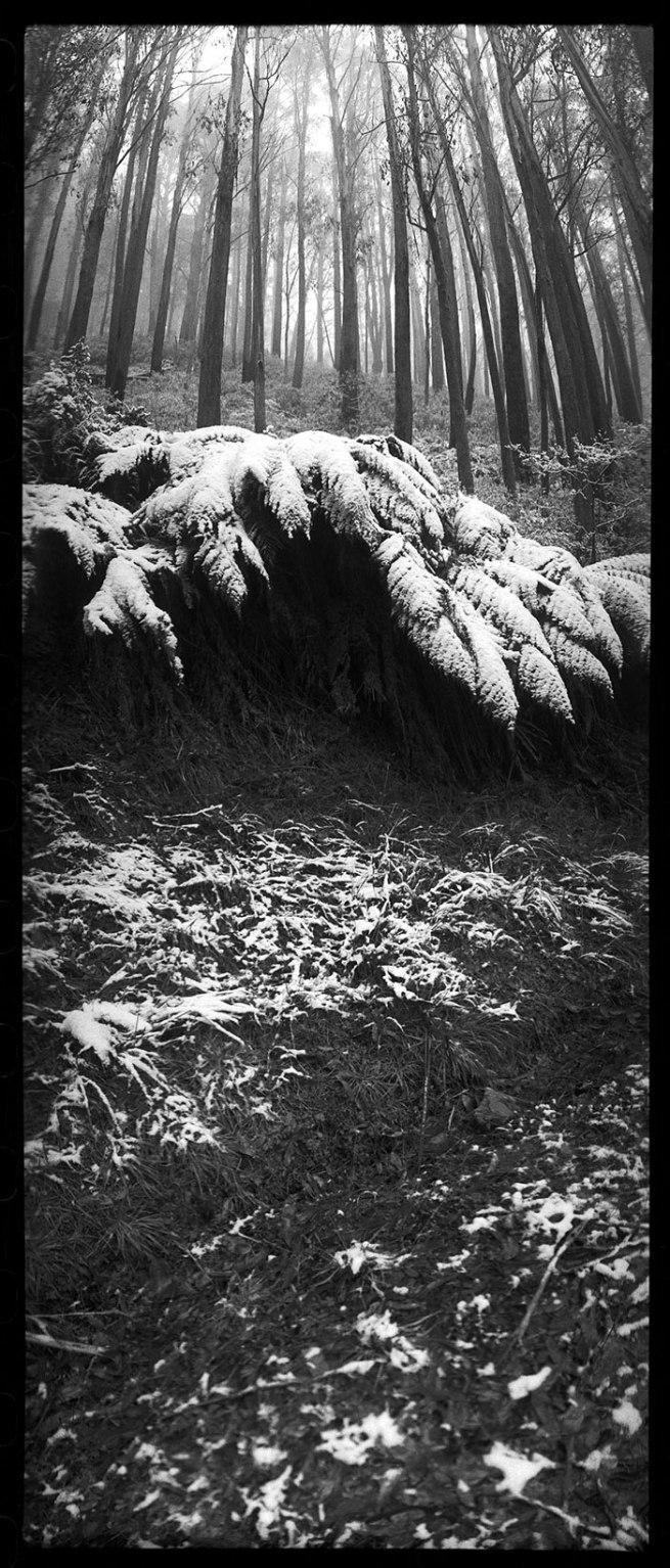 Joyce Evans(Australian, 1929-2019) 'Mount Bulla Ferns, Victoria' 1996