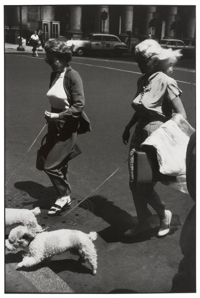 Garry Winogrand (American, 1928-1984) 'Untitled (Women Walking Poodles, New York)' about 1959