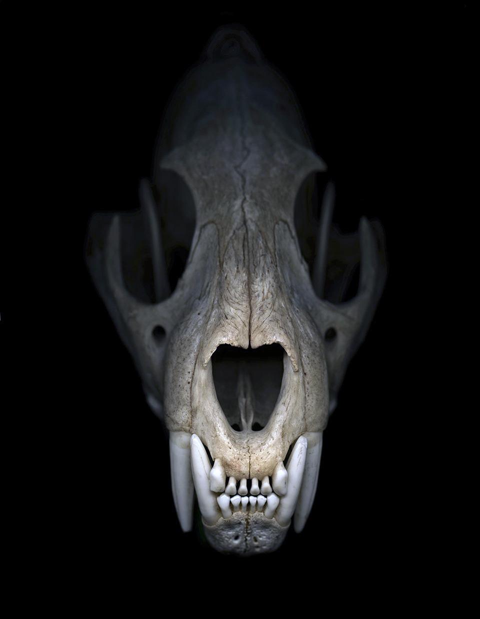 Greg Elms Cheetah skull | Art Blart