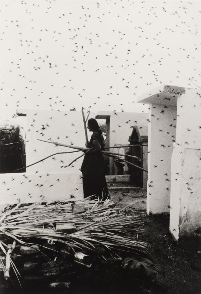 Graciela Iturbide (Mexican, b. 1942). 'Cementerio (Cemetery), Juchitán, Oaxaca' 1988