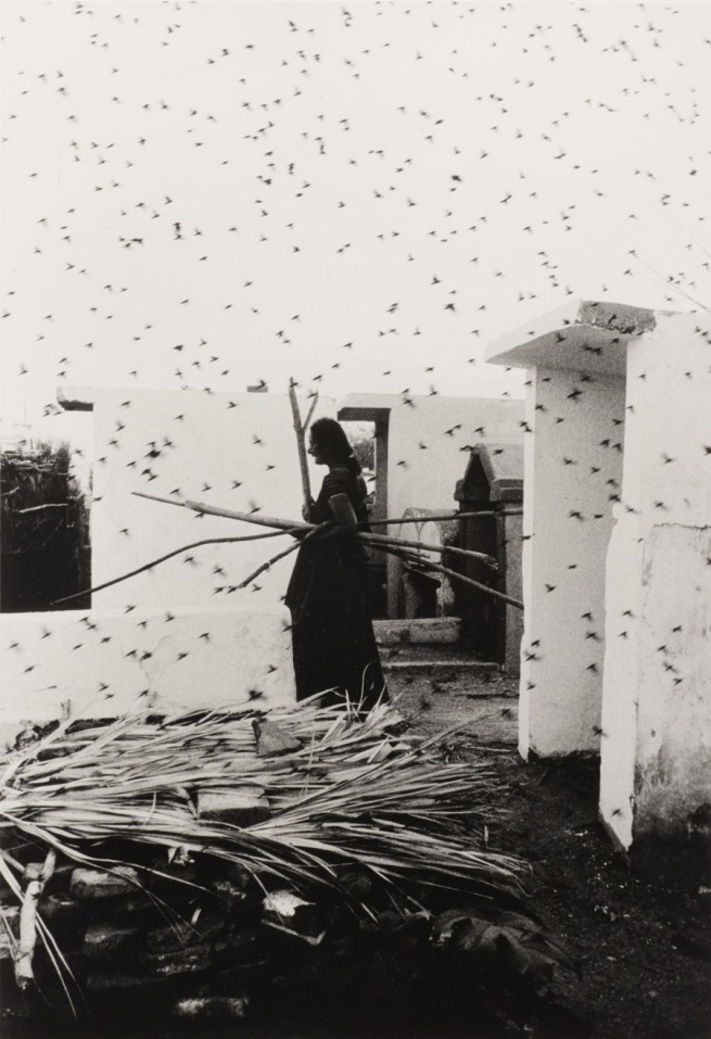 Graciela Iturbide (Born 1942, Mexico City; lives and works in Coyoacán, Mexico) 'Cementerio (Cemetery), Juchitán, Oaxaca' 1988