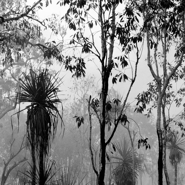 Claudia Terstappen. 'After the fire (Northern Territory, Australia)' 2002