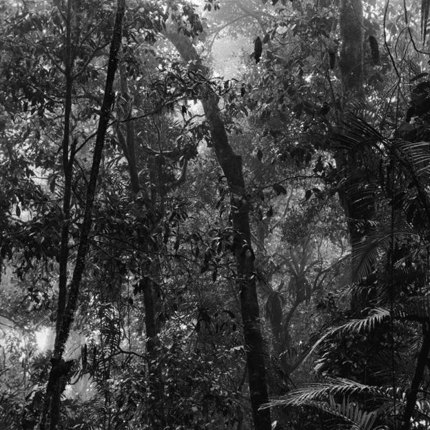 Claudia Terstappen. 'Alligator nest (Queensland, Australia)' 2002