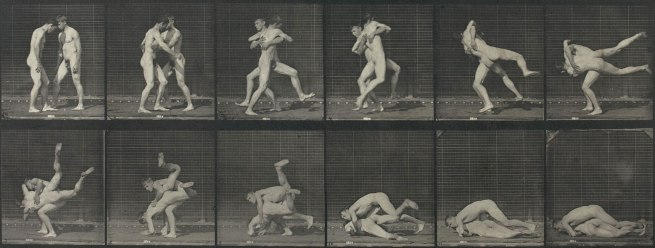 Eadweard Muybridge. 'Animal Locomotion' 1887