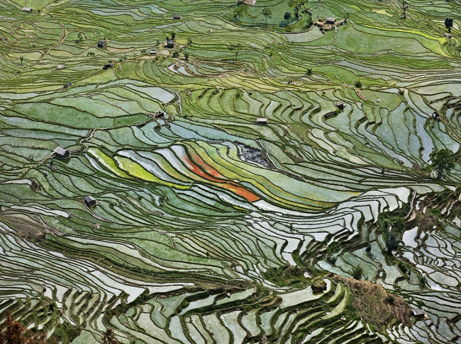 Edward Burtynsky. 'Rice Terraces #2, Western Yunnan Province, China' 2012