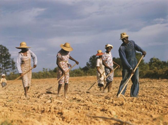 Jack Delano (1914-1997) 'Chopping cotton on rented land near White Plains, Greene County, Georgia, 1941' 1941