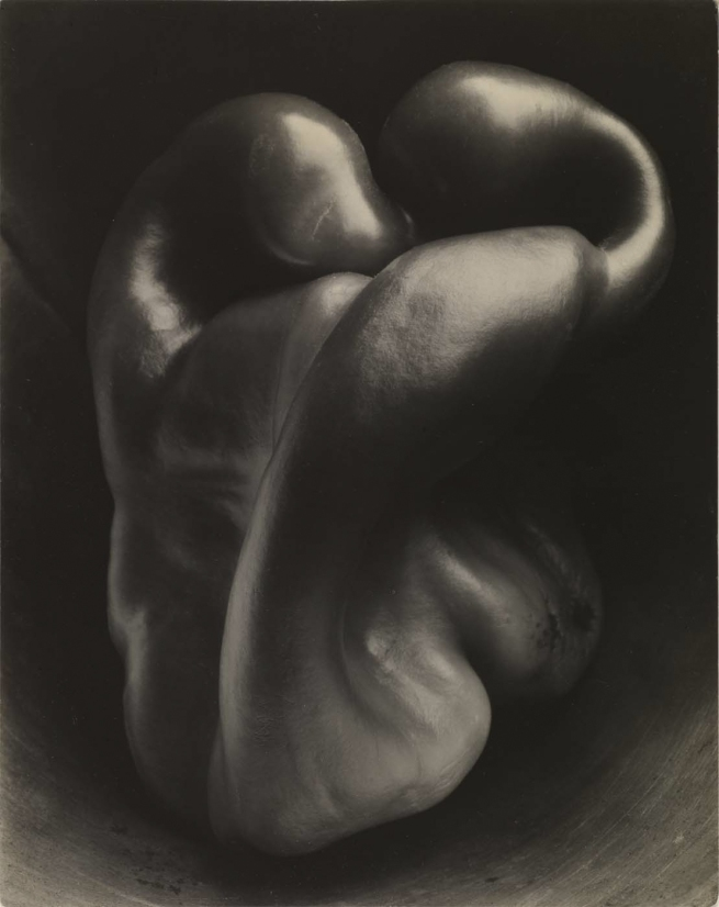 Edward Weston (born Highland Park, IL 1886 - died Carmel, CA 1958) 'Pepper no. 30' 1930