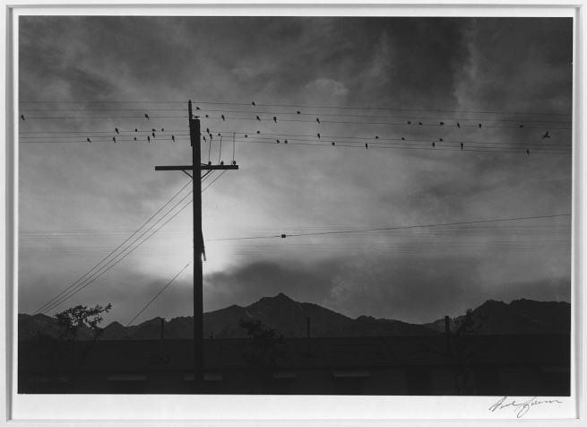 Ansel Adams (American, 1902-1984) 'Birds on wire, evening, Manzanar Relocation Center' 1943