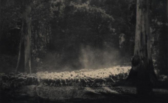 John Eaton. 'Sheep in clearing' c. 1920s