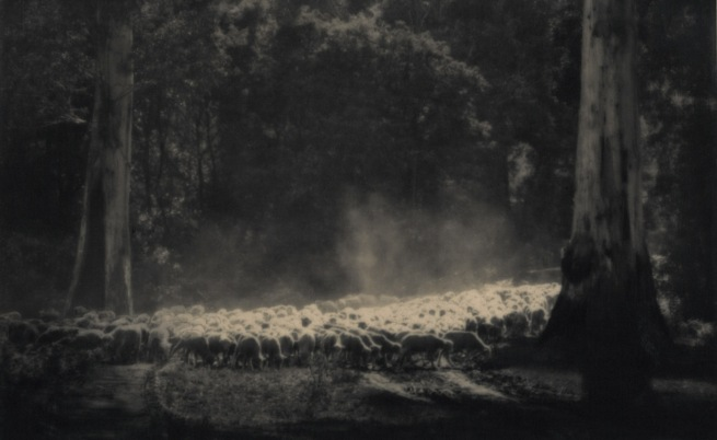 John Eaton. 'Sheep in clearing' c. 1920s