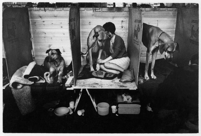 Tony Ray-Jones. 'Cruft's Dog Show, London, 1966' 1966
