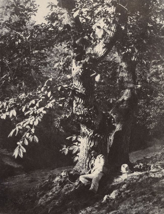 Charles Marville (French, 1813-1879) 'Man Reclining beneath a Chestnut Tree' c. 1853