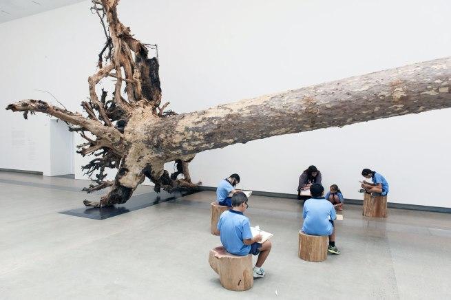 Cai Guo-Qiang (China b. 1957) 'Eucalyptus' 2013