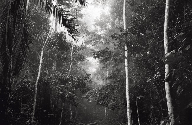 Claudia Terstappen. 'Jungle I (Brazil)' 1991
