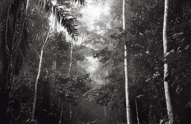 Claudia Terstappen. 'Jungle I (Brazil)' 1991
