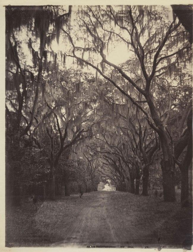 George N. Barnard (American, 1819-1902) 'Bonaventure Cemetery, Four Miles from Savannah' 1866