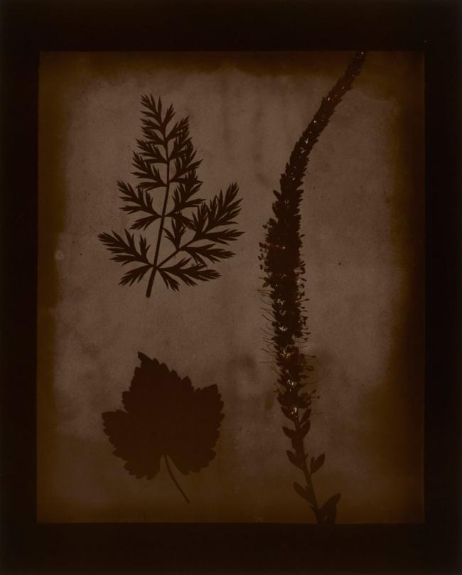Hiroshi Sugimoto (Japanese, born 1948) 'Arrangement of Botanical Specimens, 1839' 2008