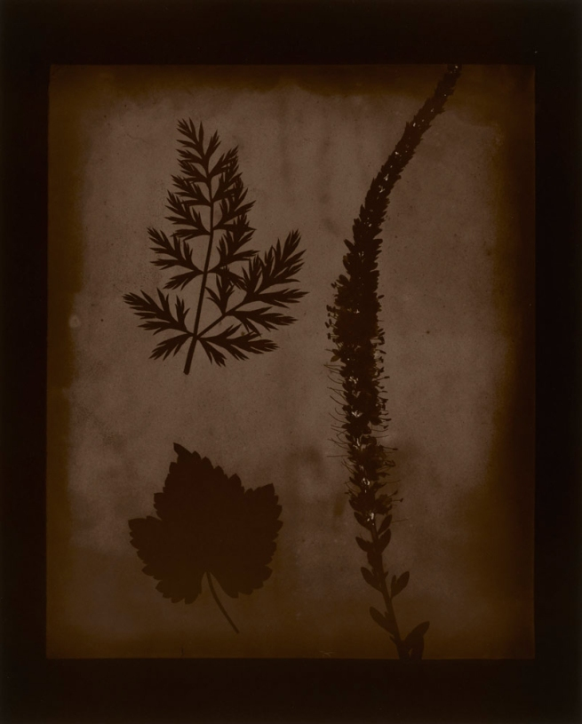Hiroshi Sugimoto (Japanese, born 1948) 'Arrangement of Botanical Specimens, 1839' 2008