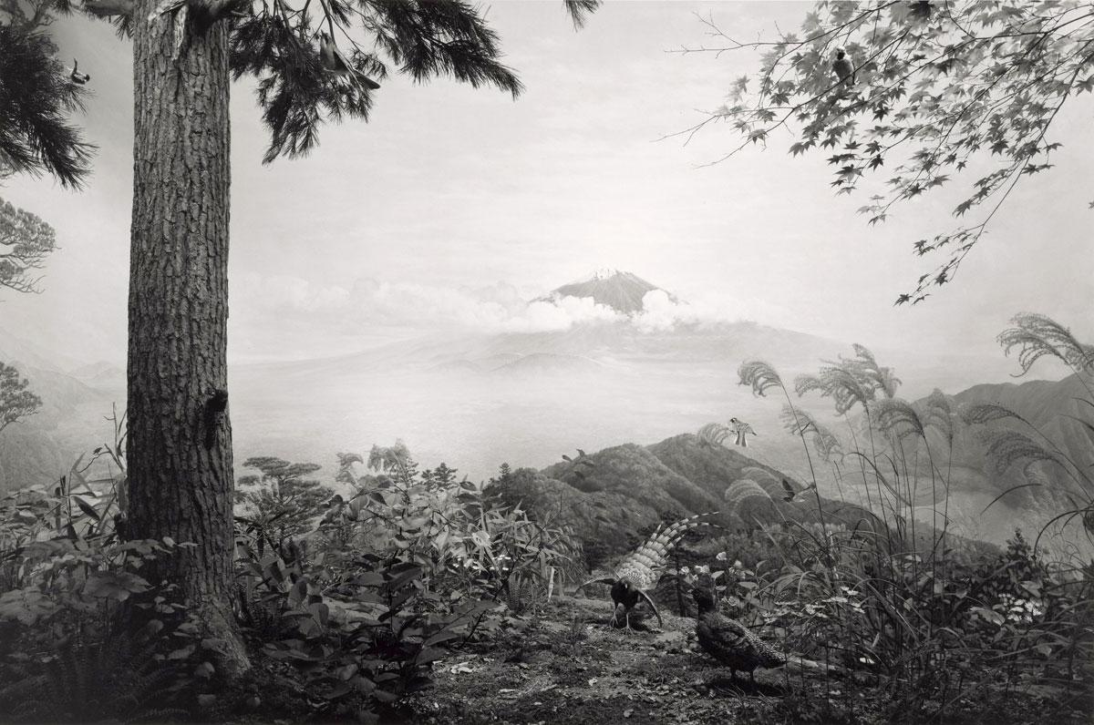 Hiroshi sugimoto japanese born 1948 birds of japan 1994