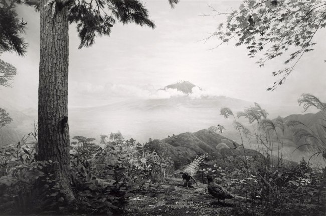 Hiroshi Sugimoto (Japanese, born 1948) 'Birds of Japan' 1994