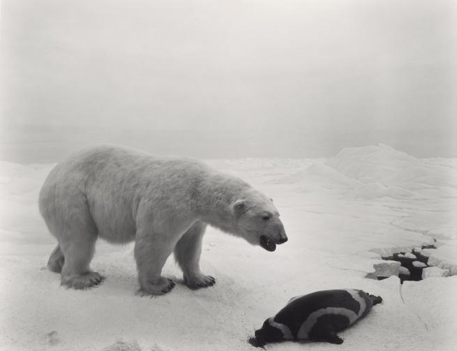 Hiroshi Sugimoto (Japanese, born 1948) 'Polar Bear' 1976