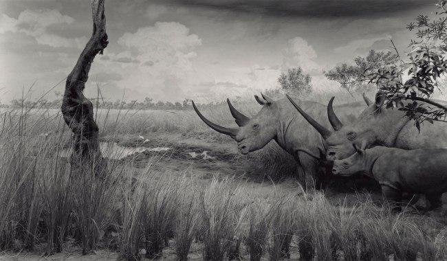Hiroshi Sugimoto (Japanese, born 1948) 'White Rhinoceros' 1980