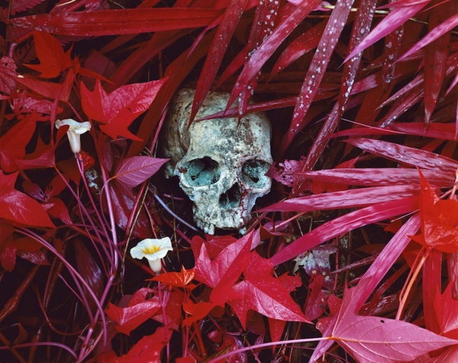 Richard Mosse. 'Of Lillies and Remains' 2012