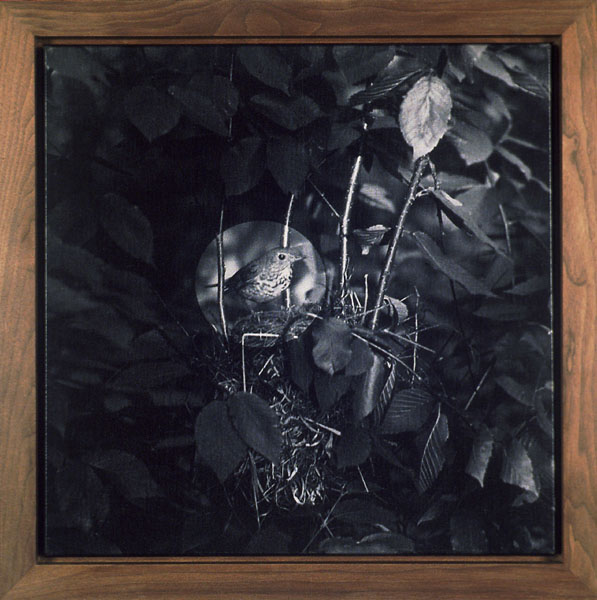 John Divola. 'Seven Songbirds and a Rabbit' (detail) 1995