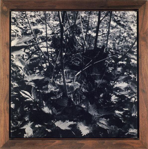John Divola. 'Seven Songbirds and a Rabbit' 1995 (detail)