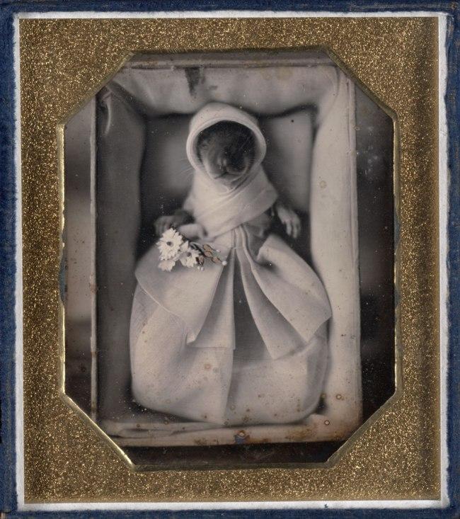 Unknown. 'Genushe (animal post-mortem)' c. 1845-1846