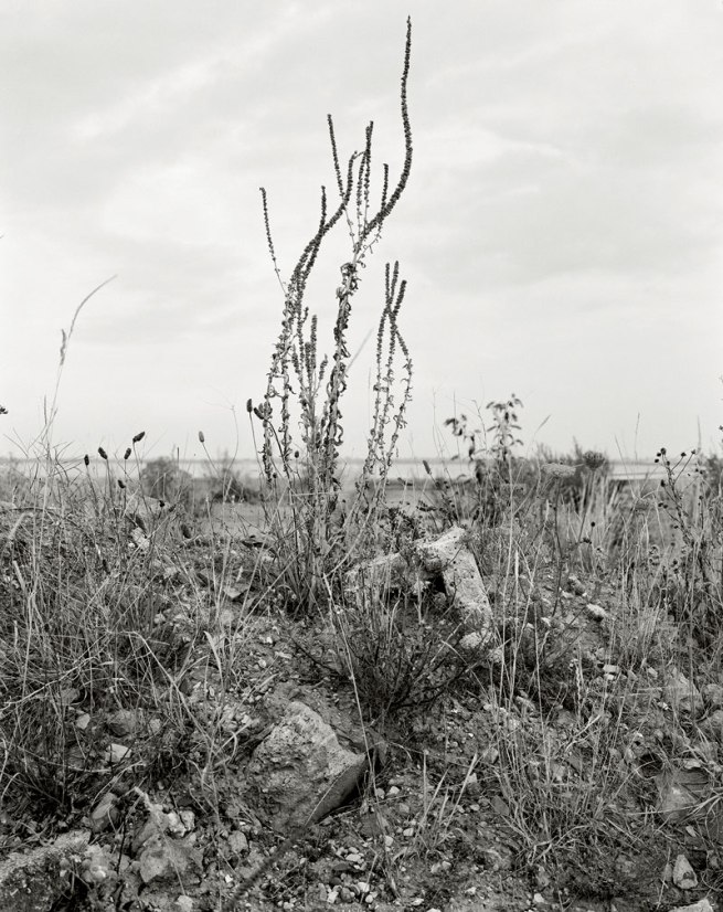 Vanessa Winship. 'Untitled' from the series 'Humber' 2010-2011 © Vanessa Winship
