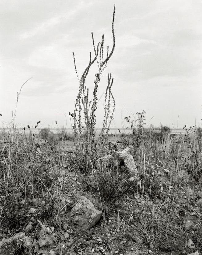 Vanessa Winship. 'Untitled' from the series 'Humber' 2010-2011 © Vanessa Winship