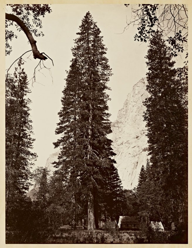 Carleton Watkins (U.S.A., 1829-1916) 'The Ponderosa, Yosemite' 1866