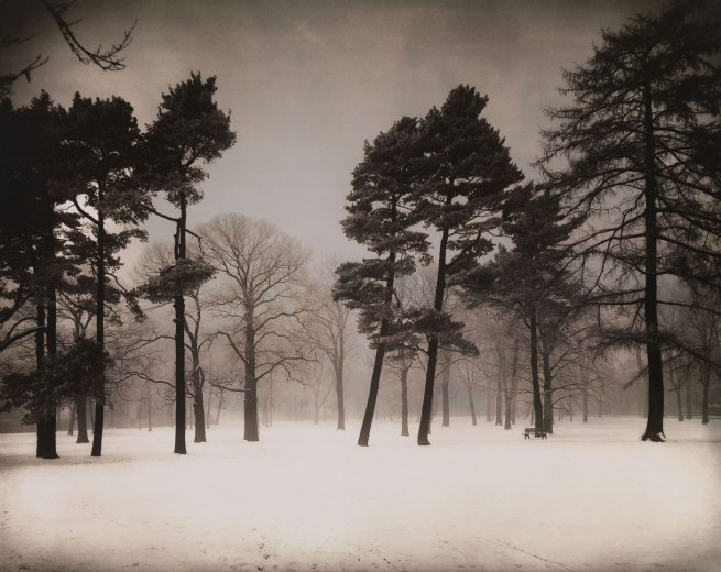 August Sander. 'Stadtwald [Urban Forest]' c. 1938