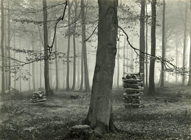 Albert Renger-Patzsch (1897-1966) 'Buchenwald in November' c. 1954