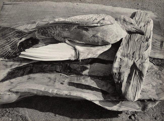Minor White. 'Navarro River, California' 1947