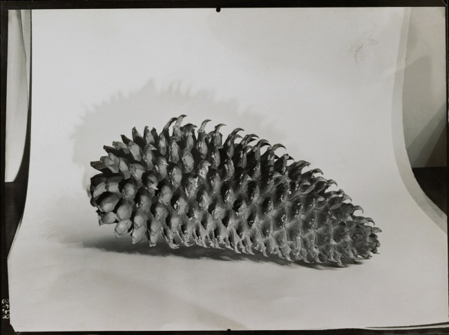 Éditions Paul Martial, Paris. 'Pine cone' c. 1931-32