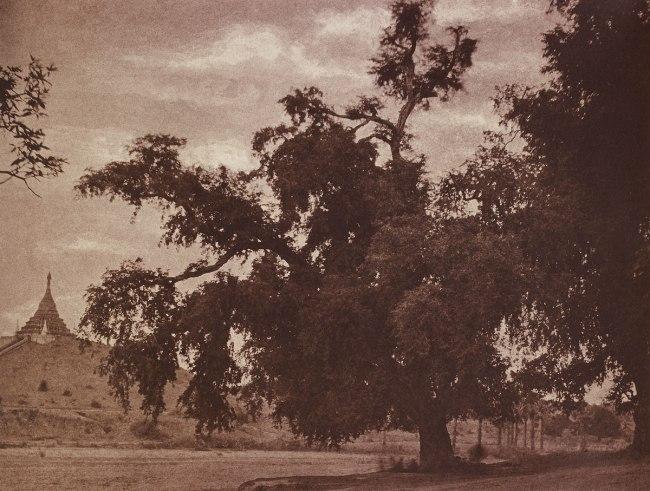 Linnaeus Tripe. 'Ye-nan-gyoung: Tamarind Tree, August 14-16, 1855' 1855