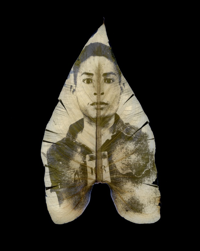 Binh Danh. 'The Botany of Tuol Sleng Genocide Museum #2' 2008