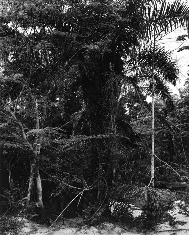 Paul Strand. 'Jungle, Ashanti Region, Ghana' 1964