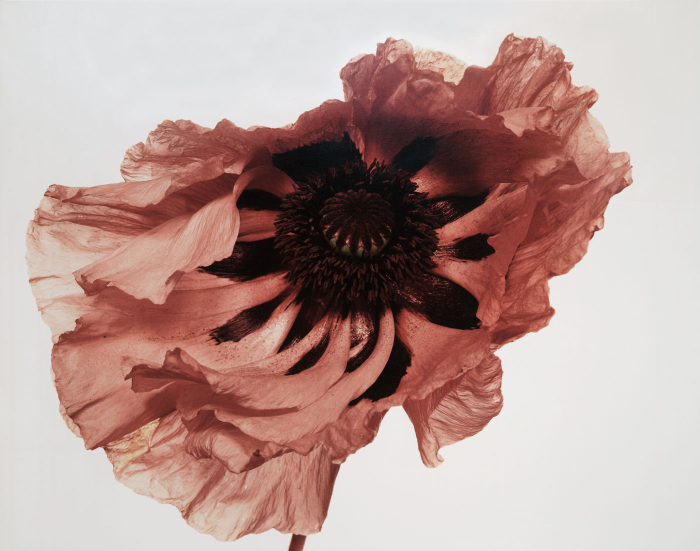 Exhibition 'Irving Penn Resonance' at the Palazzo Grassi Venice
