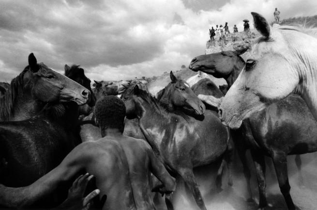 Ulrich Mack. 'Wild horses in Kenya' 1964