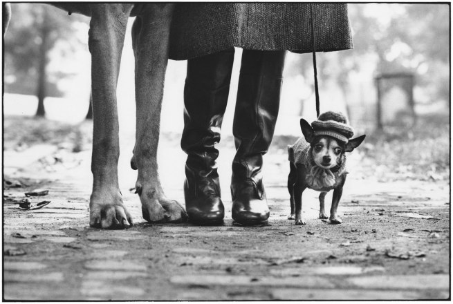 Eliott Erwitt. 'Felix, Gladys and Rover' New York City, 1974