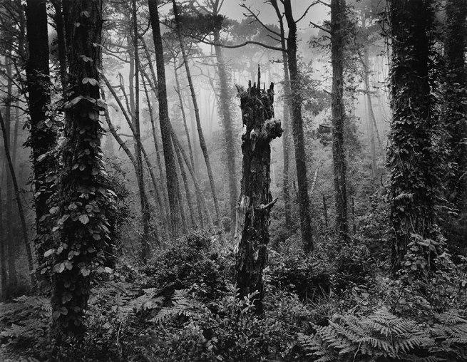 Wynn Bullock (American, 1902–1975) 'Del Monte Forest' 1969