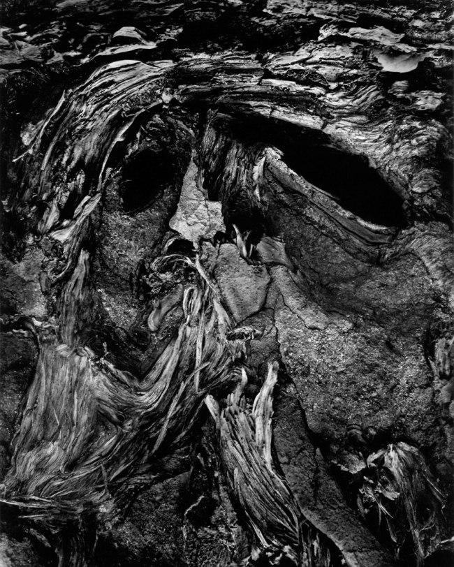 Wynn Bullock (American, 1902–1975) 'Fallen Tree Trunk' 1972