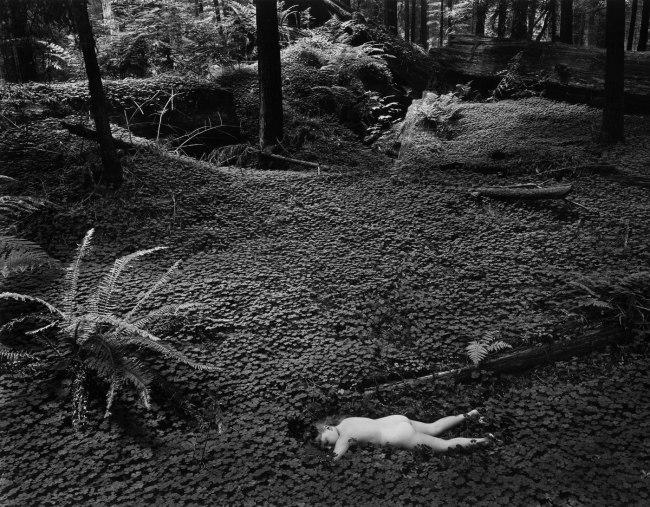Wynn Bullock (American, 1902–1975) 'Child in Forest' 1951
